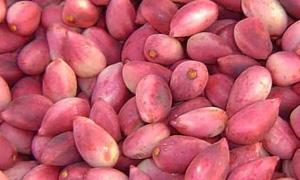 اتحاد غرف الزراعة: خطة لتقديم التسهيلات لمزراعي الفستق الحلبي لتصدير محصولهم منعاً من التهريب