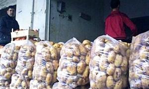المصرف الزراعي بالسقيلبية يصرف 15 مليون ليرة كقيم دعم لمزارعي الزيتون والبطاطا