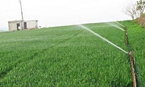 وزير الزراعة: 2.1 مليون هكتار إجمالي مساحات القمح والشعير المزروعة في سورية حتى الآن