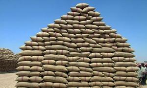 تسويق 1031366 طنا من القمح إلى مؤسستي تجارة وتصنيع الحبوب واكثار البذار حتى الآن