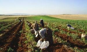 الزراعة الحافظة: 36% توفير بالتكاليف والانتاجية والوزارة تدخل 56 بذارة