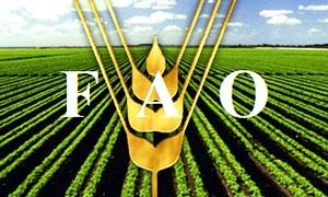 الفاو: تراجع أسعار الغذاء للشهر الثالث على التوالي