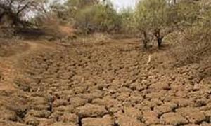 8.5 ملايين ليرة تعويضات للمزارعين المتضررين من آثار الجفاف في حلب والرقة والغاب