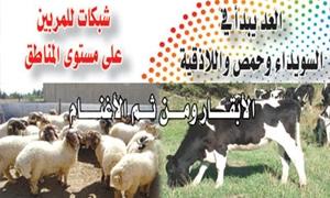 منصور: 315  ألف رأس عدد القطيع  في منطقة الغاب والحالة الصحية جيدة