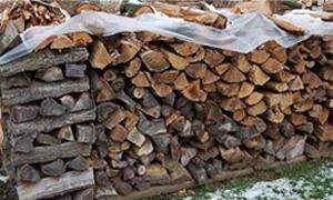 السنديان بـ28 الف وفحم الاركيلة بـ46 الف.. الزراعة تبدء ببيع المنتجات الحراجية مع تحديد اسعارها