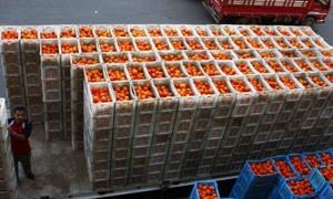 عثمان: 17 الشهر الجاري تصدير أول دفعة من الحمضيات والتفاح السوري إلى روسيا
