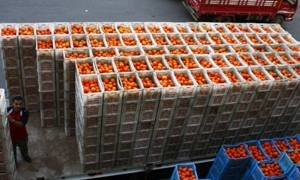 مسؤول: إنخفاض صادرات سورية من الخضار والفواكه لـ7 أطنان يومياً ..و20 طائرة حاجتنا لتعود صادراتنا لما عليه