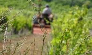 الزراعة تقر مشروع قانون يسمح