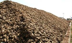 معمل سكر حمص متوقف بسبب عدم توافر السكر الأحمر الخام