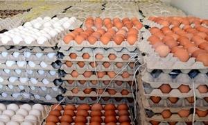 الزراعة :السماح بتصدير 2.5 مليون بيضة أسبوعياً