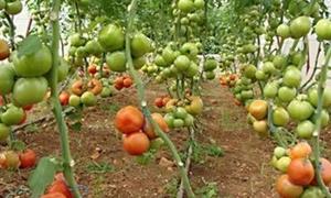الزراعة تحدد الأسعار التصديرية للغراس المثمرة والحراجية
