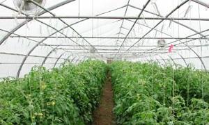 الزراعة العضوية يمكن أن تحقق أرباحاً تتجاوز 60% مقارنة مع التقليدية