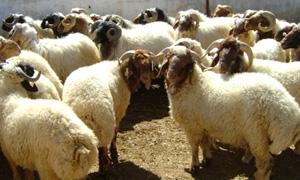 نحو 28 مليار ليرة خسائر القطاع الزراعي والحيواني في ريف دمشق