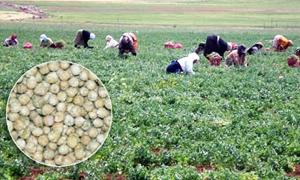 تمويل 14 مشروعا محليا في محميات الفرلق وعبد العزيز وابو قبيس