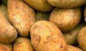 مسؤول سوري:لهذه الأسباب ارتفعت أسعار البطاطا في أسواقنا المحلية