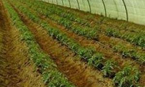 مسؤول:تراجع نسبة المشتغلين بالزراعة إلى 13 بالمئة في سورية