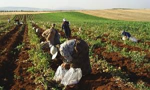 الفاو تدرس دعم المزارعين في سورية بـ60 مليون دولار خلال العام 2015