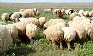 6 أشهر لتصدير الطيور والحيوانات البرية..الزراعة: تعديل ترخيص محلات الاتجار وبيع الحيوانات لسنة واحدة