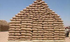 نحو 400 ألف طن كمية الأقماح المسوقة في سورية لغاية أمس