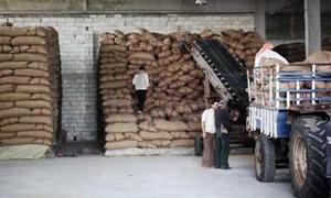 فرع الأعلاف في طرطوس يوزع 14 ألف طن من العلف المقنن على المزارعين