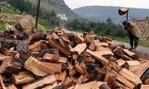 أكثر من 70% من غابات درعا تحولت إلى حطب!!