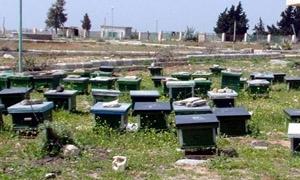 سورية تستورد 150 طنا من العسل وغبار الطلع خلال العام2014