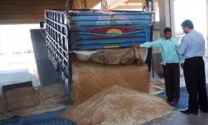 تواصل عمليات شحن وتخزين الحبوب للصوامع بحماة..و277 ألف طن المستلم لغاية الآن