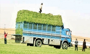 500 ليتر مازوت لكل سيارة تنقل المحصول الزراعي إلى مراكز الاستلام عن كل حمل