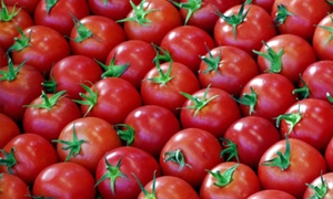 سورية تحتل المرتبة 19 عالمياً في إنتاج البندورة بمليون طن سنوياً