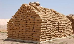 725 ألف طن من الأقماح المستلمة و100 ألف طن شعيراً