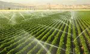 سورية تبدأ خطة لزراعة محاصيل تكفي حاجتها لعام 2015 بمساحات تتجاوز 575 ألف هكتار