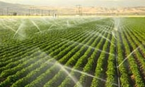 وزير الزراعة: تقليص مساحات المحاصيل الصيفية والتوسع بالشتوية مقترن بالمعادلة المائية