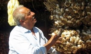يا بلاش.. ألف ليرة سورية سعر كيلو الثوم بدمشق