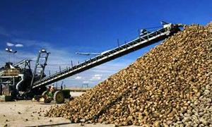 مؤسسة السكر تخطط لإنتاج 1.3 مليون طن من الشوندر السكري للعام 2014