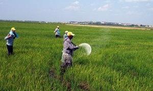 14 مليون ليرة قيمة مبالغ دعم المحاصيل لـ576 مزراعاً في حماة