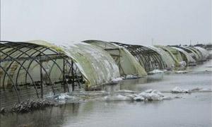 صندوق التعويض: 40 ألف بيت بلاستيكي تضرروا بسبب العاصفة الثلجية