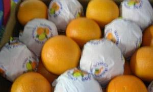 عثمان: تصدير 2.5% من الحمضيات إلى روسيا لن يؤثر على السوق المحلية