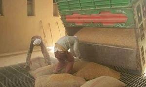 التجارة: 100 ألف طن من القمح في صوامع سبينة ..وتوقيع عقد لترميم أضرارها