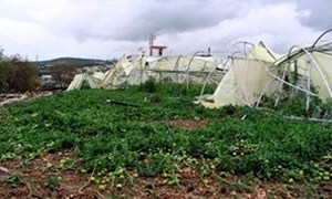 وزارة الزراعة: نسبة أضرار الأحوال الجوية على المحاصيل والأشجار المثمرة تراوحت ما بين 15-100%