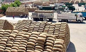 156 ألف طن كمية الأقماح المسوقة لمؤسسة الحبوب .. ونحو20ألف طن من الشعير