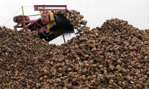 وزير الزراعة: العروة الجديدة للشوندر السكري ستزيد إنتاج السكر بمقدار 13 ألف طن قيمتها 650 مليون ليرة