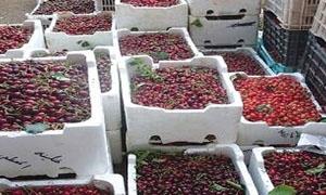 4 آلاف طن صادرات سورية من الكرز العام الماضي
