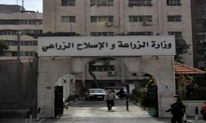 الزراعة: اعتماد الشعار الخاص بالمنتجات العضوية السورية