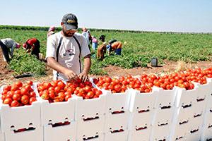 روسيا تخصص 3 ملايين دولار أمريكي لتنمية القطاع الزراعي في سوريا