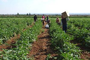 الكويت تقدم 3 ملايين دولار كمنحة مالية لدعم المزارعين في سورية