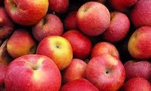 الخزن والتسويق بحماة تقوم باستجرار 8آلاف طن من التفاح الجولاني