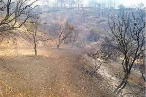 مسؤولون يكشفون حجم الخسائر الناجمة عن الحرائق ..وخبير يشكّك بالأرقام و النوايا!