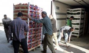 غرفة زراعة دمشق تمنح 2626 شهادة تصدير بقيمة 68.6 مليون دولار خلال 3 أشهر