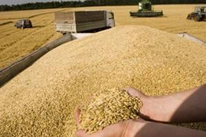 وزارة الرزاعة تقول: أسعار القمح الجديدة قابلة للزيادة