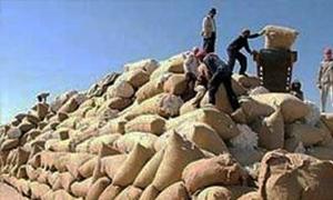 وزارة الزراعة تمدد فترة استلام القطن لغاية 15 الشهر الجاري... و480 الف طن الأقطان المسوقة